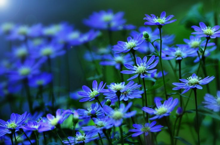 lovely flowers blue blue blue