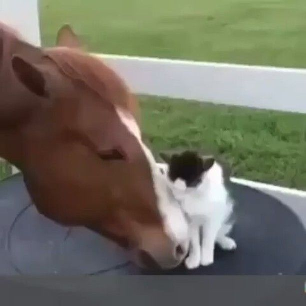 Sooooooo CUTE Relationship status: It's not complicated, #bae is ready to fall in love ❤❤❤. From @ig_animalplanet -  Tag your friends  Via @claulup - #relationshipstatus #relationshipgoals #itsallforlove #relationships #itscomplicated #love #cat #cats #catsofinstagram #gato #gatitos #gatos #gatosdeinstagram #FALLinlove #cattitude #caturday #baes #horse #horses