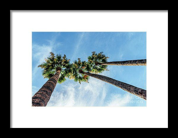 Green Palm Trees On Blue Sky Framed Print