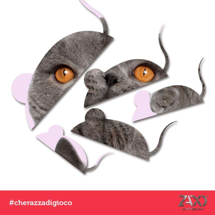 OGGI SI GIOCA a #cherazzadigioco ... CHE RAZZA DI GATTO È?  Un indizio: Occhi color ambra! 😂😂 La soluzione oggi pomeriggio!