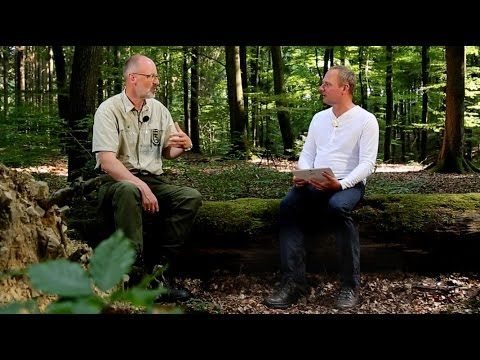 Bäume sprechen miteinander, sie haben ein kollektives Gedächtnis. Klingt unglaublich, ist aber wissenschaftlich belegt. SWR4 Redakteur Lars Michael Storm und...