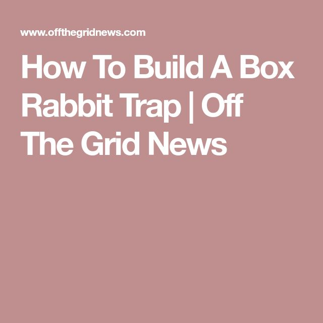 How To Build A Box Rabbit Trap   Off The Grid News