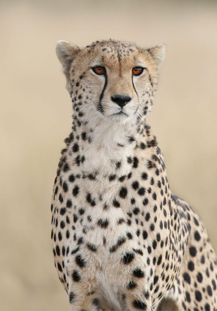 Amani, Masai Mara, july 2013