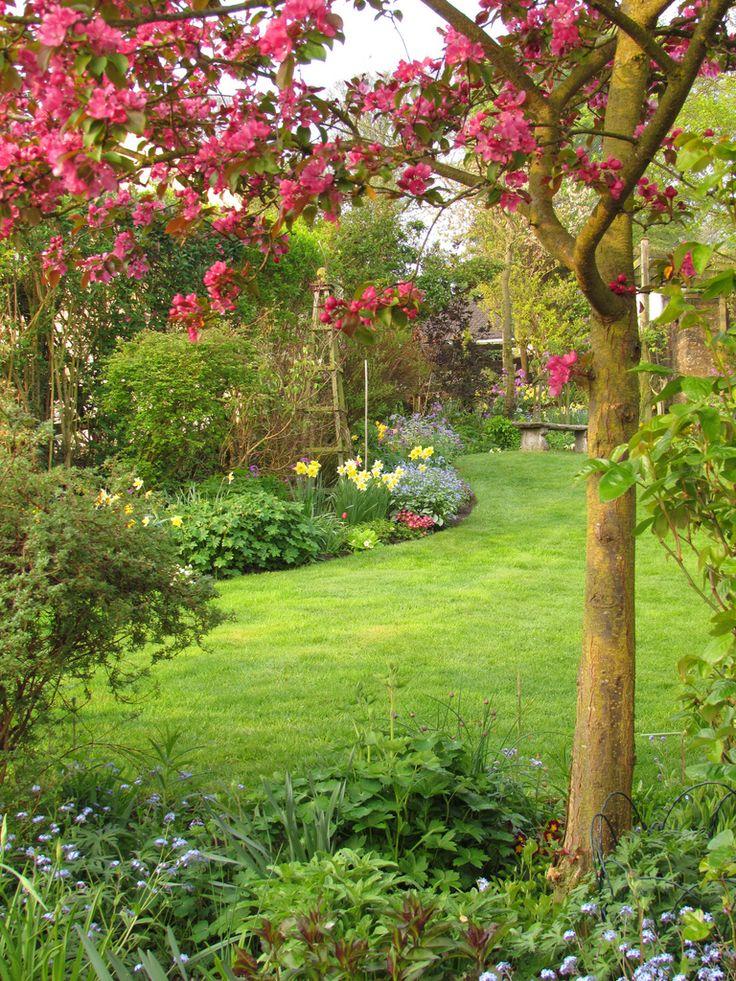 7 best arbres et arbustes pour petit jardin images on for Arbres pour jardin