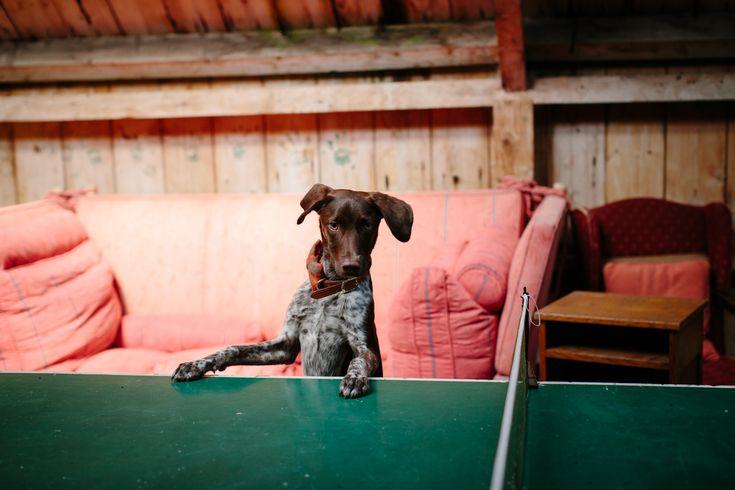 CARO WEISS PHOTOGRAPHY // best of 2016 modern wedding photographer wedding dog