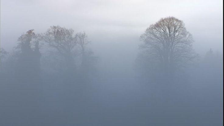 Fog / Tree / Silhouette / Germany | HD Stock Video 510-647-639 ...
