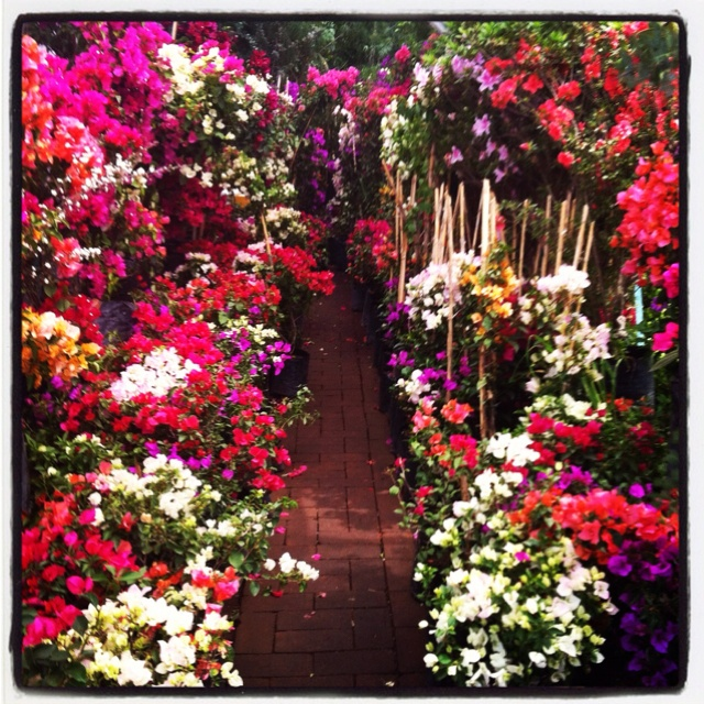 Xochimilco m xico city places i d like to go pinterest for Jardineros en xochimilco
