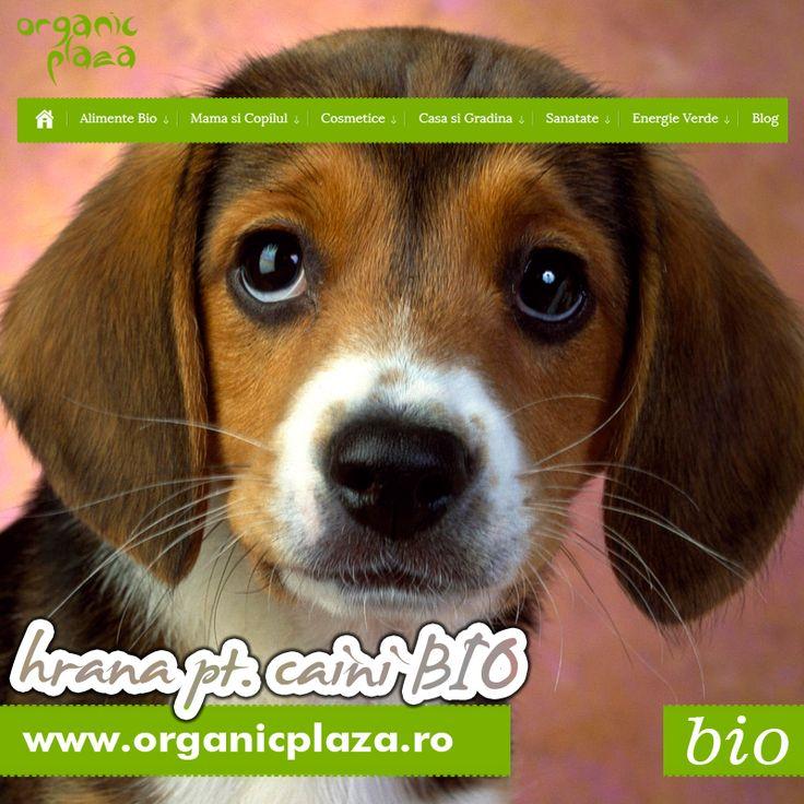 Mancare Bio pentru Catei! http://organicplaza.ro/hrana-caini