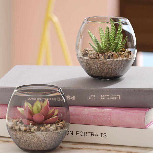 2 Piece Succulent Plant In Pot Set Succulents In Glass Succulents Decor Succulent Pots