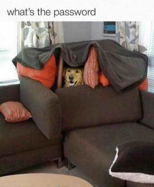 Funny Couches best 25+ sofa fort ideas only on pinterest | build a fort, fun