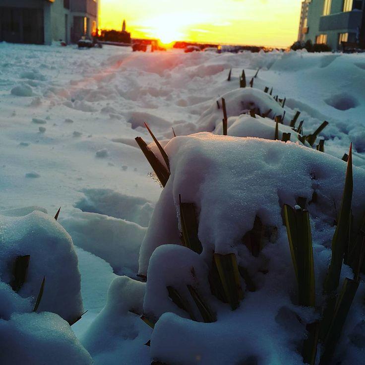 """""""'Kar' için de sevdalı biri vardır, herkes için biri olduğu gibi, Günaydın❤❤❤ #gunesacti #karlareriyor #kar #snow #istanbuldakarvar #goodmorning #günaydin…"""""""
