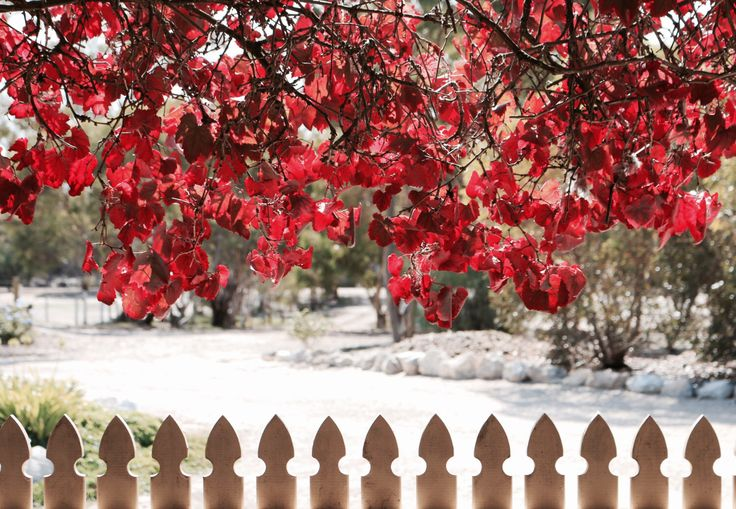 A personal favourite from my Etsy shop https://www.etsy.com/au/listing/276594710/autumn-in-country-australia-photographic