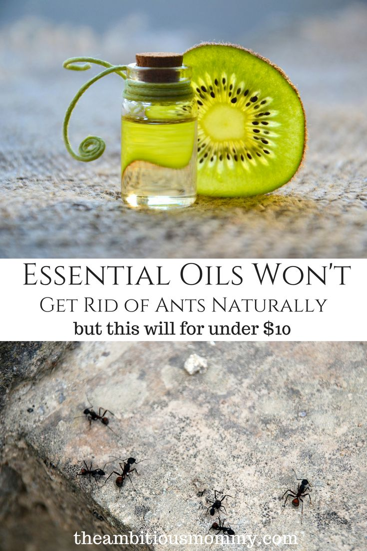 You don't need to pay a lot of money spraying harmful chemicals to get rid of an ant problem in your home. You don't need to buy a set of essential oils. This simple recipe will get rid of the ants for good! #getridofantsnaturally #getridofants
