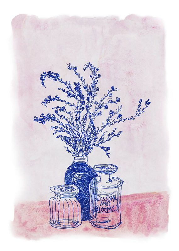 """Blue Ink illustration of the Australian native wildflower Thrypotomene """"On My Coffee Table Today""""  via https://www.etsy.com/au/sweetminnielou/listing/503374042/blue-ink-art-prints-flower-prints"""