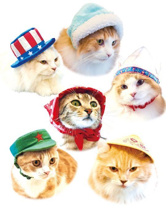 Necos Cat Hats World Traveler (8 Pack) Pet headwear from around the world a0853c86592c