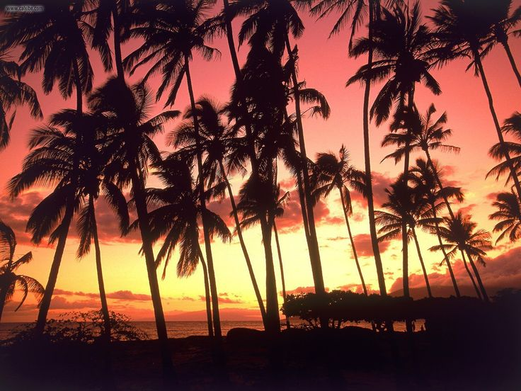 Hawaiian Sunsets <3