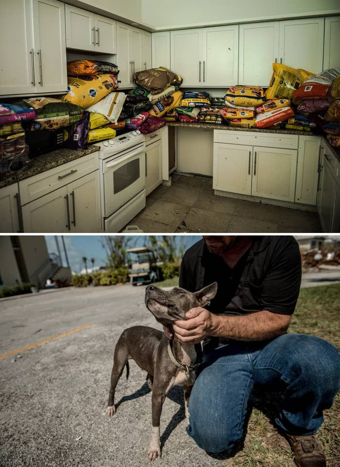 Animal Rescuers Are Still Finding Dozens Of Pets Left Abandoned By