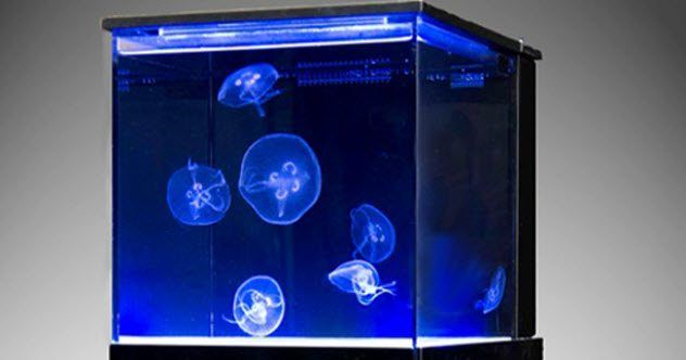 10 Fascinating Makes use of For Jellyfish