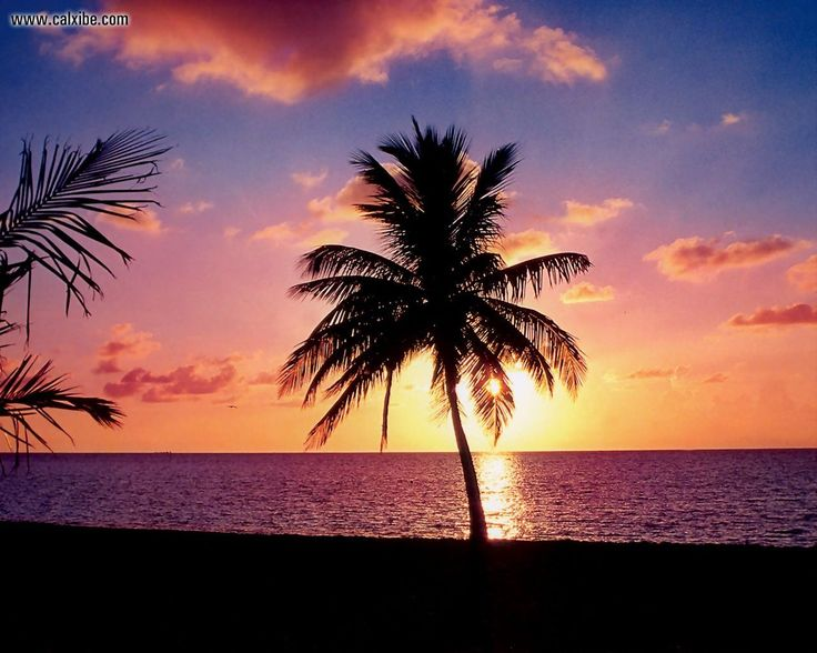 Tropical Island Beach Ambience Sound: 41 Best Images About Tropical On Pinterest