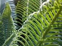 Palma, Plant, Leaves, Nature, Green