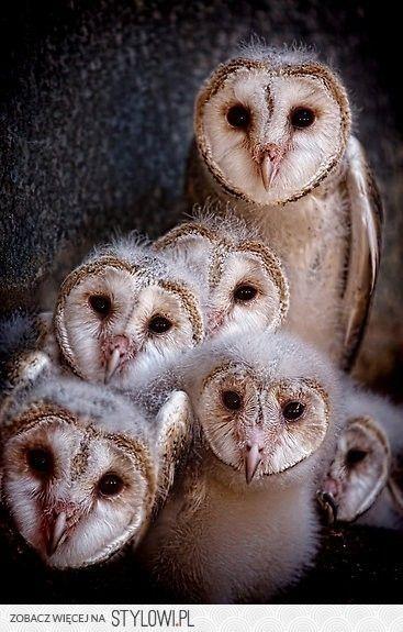 Parliament of owls  Attn:   Elizabella Lemoncella :)