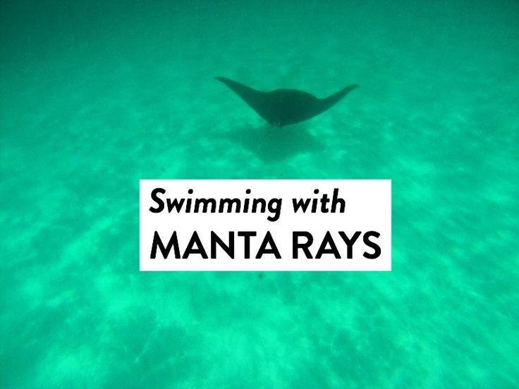 Swimming With Manta Rays at Ningaloo Reef in Australia