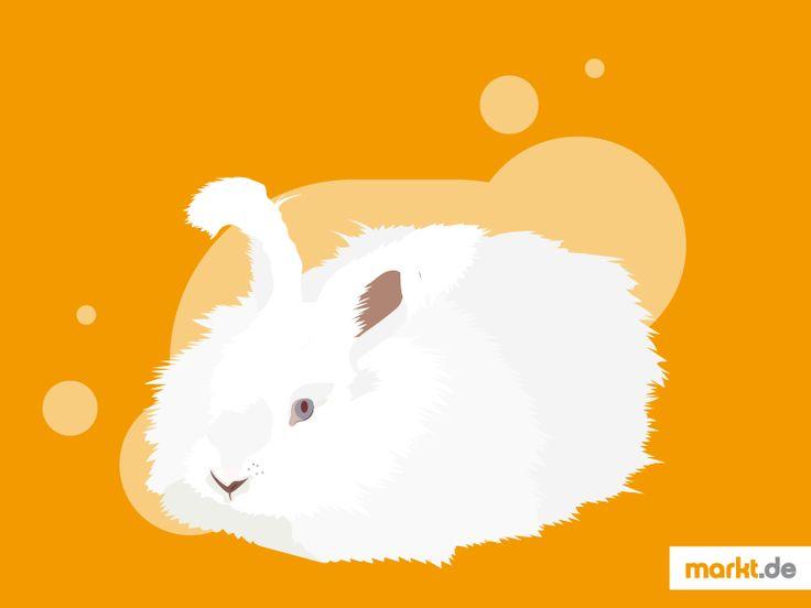 🐇Das Angora-Kaninchen im Portrait | markt.de #haltung #zucht #charakter #aussehen #angora #kaninchen