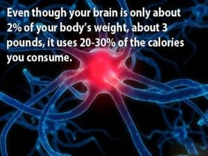 The human brain consumes up to 20% of the energy used by the entire human body which is more than any other single organ. The brain represents only 2% of body weight yet it receives 15% of the cardiac output and 20% of the total body oxygen consumption. (source) Our brains create major nutrition demands...