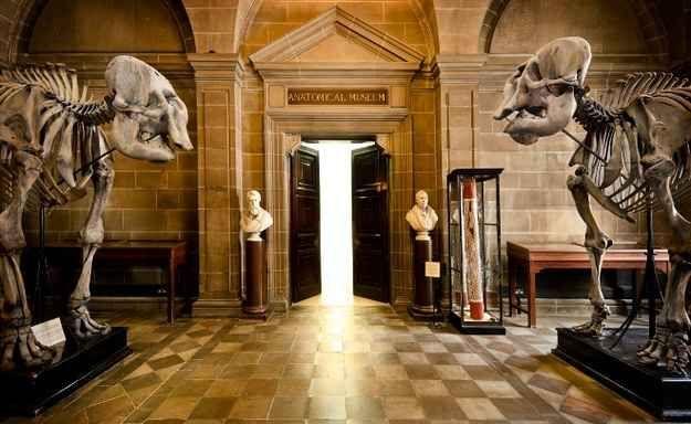 Edinburgh University Anatomical Museum, Edinburgh