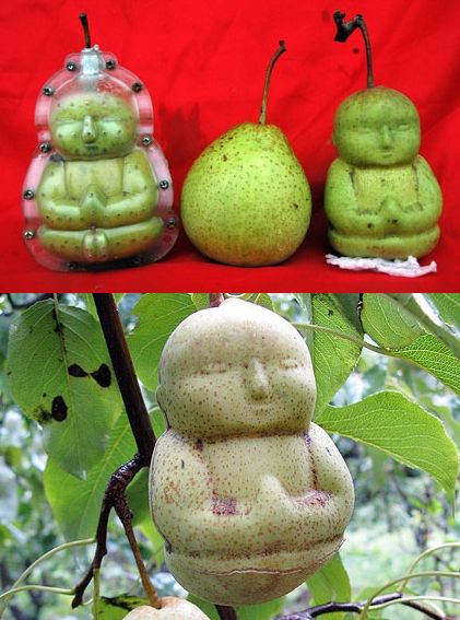 how to cut pears for a fruit tray