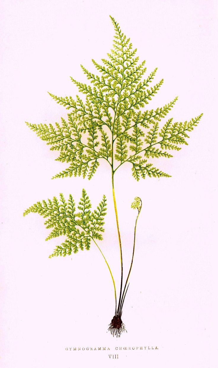 3457 best images about botanical prints on pinterest for Botanical tattoo london