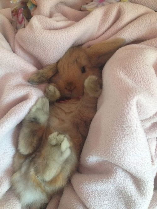 Rabbits are so cute when they are sleeping ❤️❤️❤️