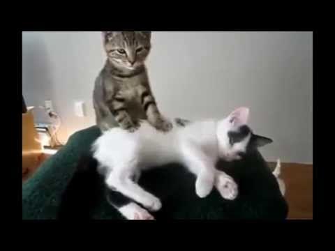Pisici amuzante - YouTube