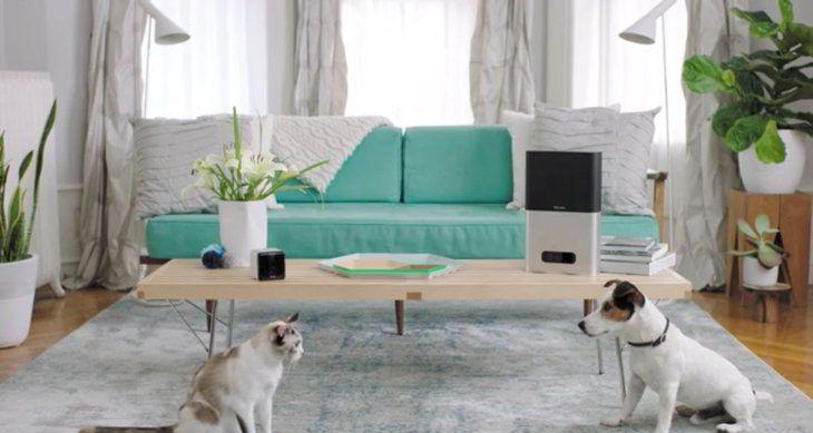 #Bienestar #cámaras #Cuidados Petcube: audio, video y juegos para cuidar al perro y al gato estando lejos de casa