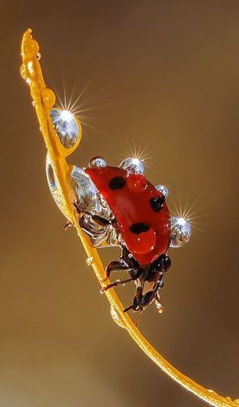 Can you find beauty in a raindrop on a lady bug's back? :) <3 I can