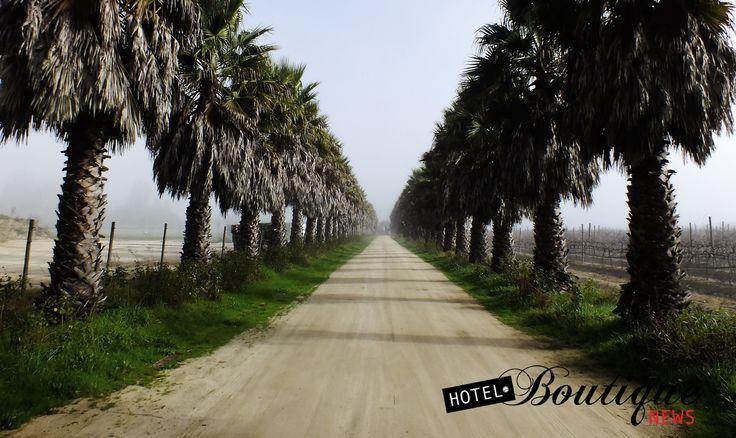 Camino a la Virgen Bodegas RE , Valle de Casablanca , Chile