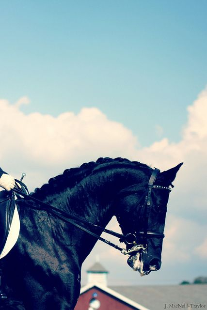 black and blue | Dressage at Devon l Flickr - Photo Sharing!