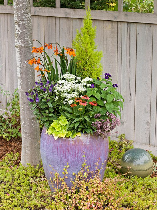 There are lots of reasons growing plants in pots is so popular: It enables space-challenged gardeners to tend to a range of flowers, vegetables, and even dwarf trees and shrubs. Here are the dos and don'ts of caring for potted plants.