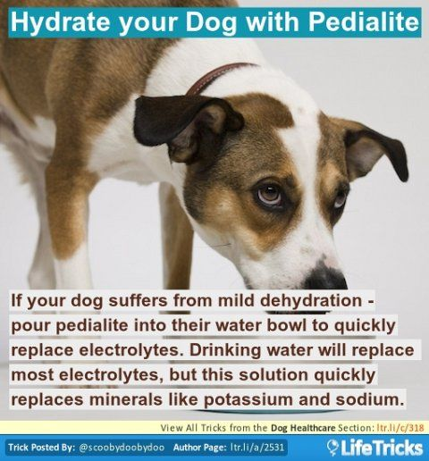 Dog Healthcare - Hydrate your Dog with Pedialite