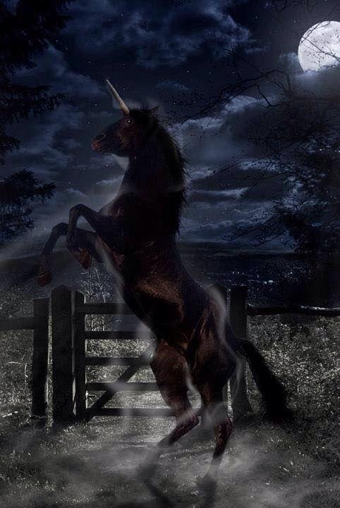 Black Unicorn Fantasy Myth Mythical Mystical Legend