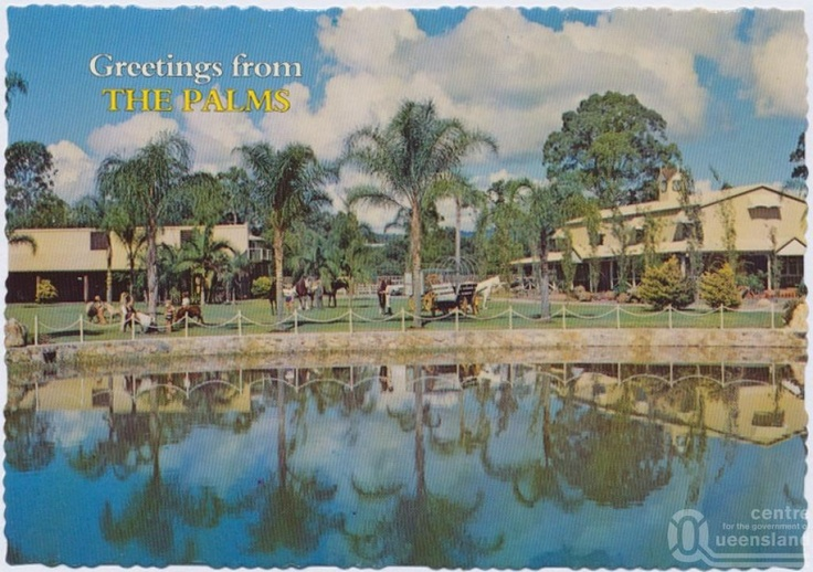 The Palms Horse Stud Farm - Postcard circa 1970's