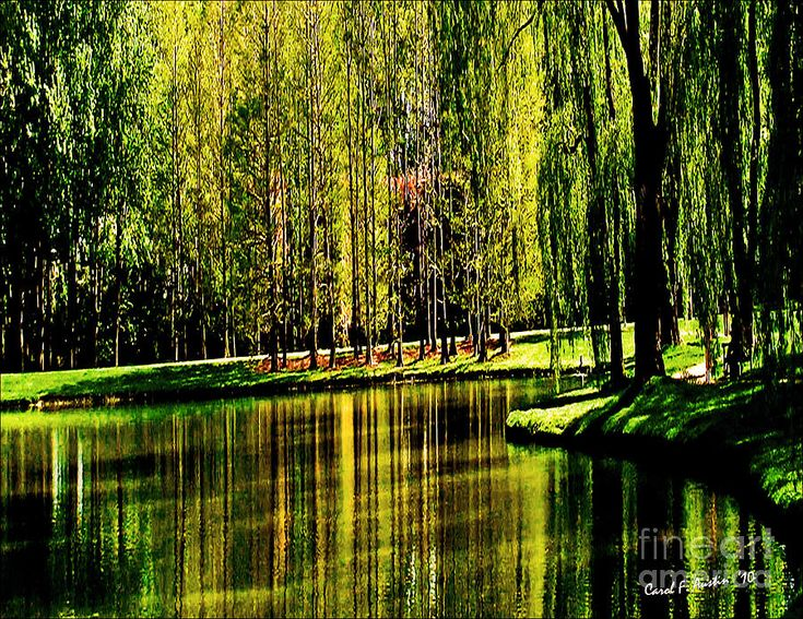 weeping willow trees are so pretty