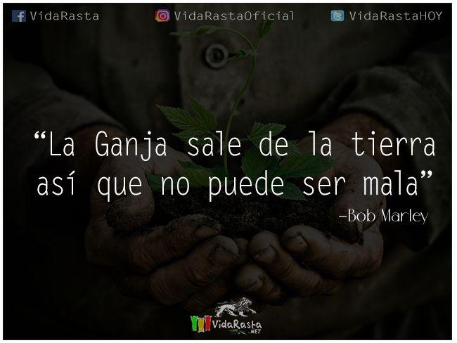 La Ganja sale de la tierra asíque no puede ser mala - Bob Marley   #FrasesReggae #BobMarley #FrasedeBobMarley #Frasesobrelamarihuana #Marihuana #Ganja