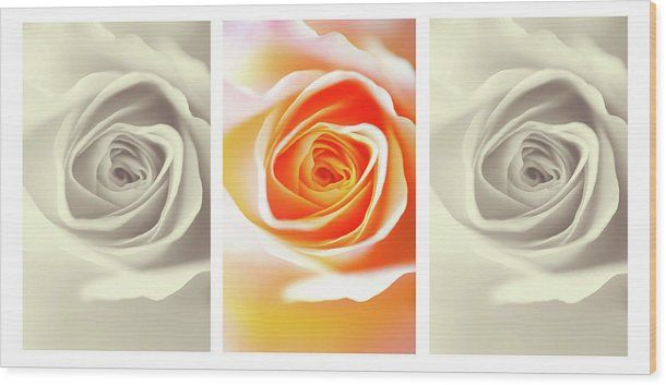 Jenny Rainbow Fine Art Photography Wood Print featuring the photograph Creamy Dreamy Roses Triptych.  Stylish decorative triptych wooden panel for home decor with Shabby chic touch. Wood prints available in different sizes to meet your require. Order and payment online, delivery, 30 days money back guaranty. To buy this artwork just click on image. #JennyRainbowFineArtPhotography