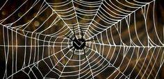 Last van spinnen zo kom je ervan af.