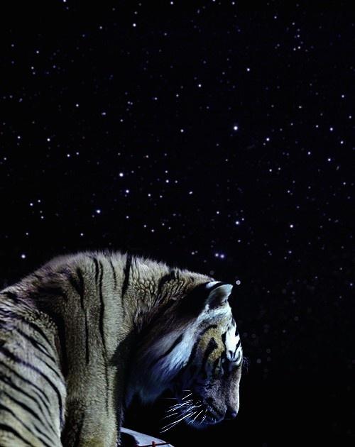 35 best pi and richard parker images on pinterest wild for Life of pi animals