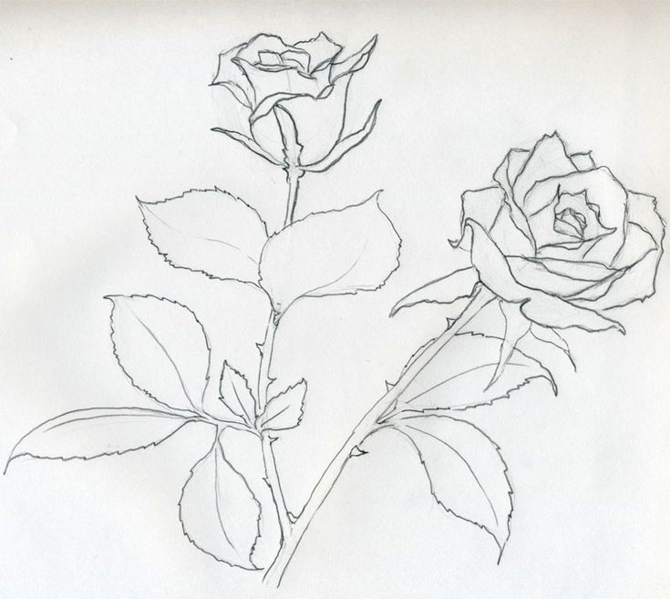 Line Drawing Method : Best images about rose art coloring pages on