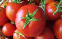 Los transgénicos son seguros. Hasta Alemania lo reconoce. | Agricultura | Tomates con genes