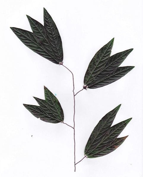 Leaves on paper.