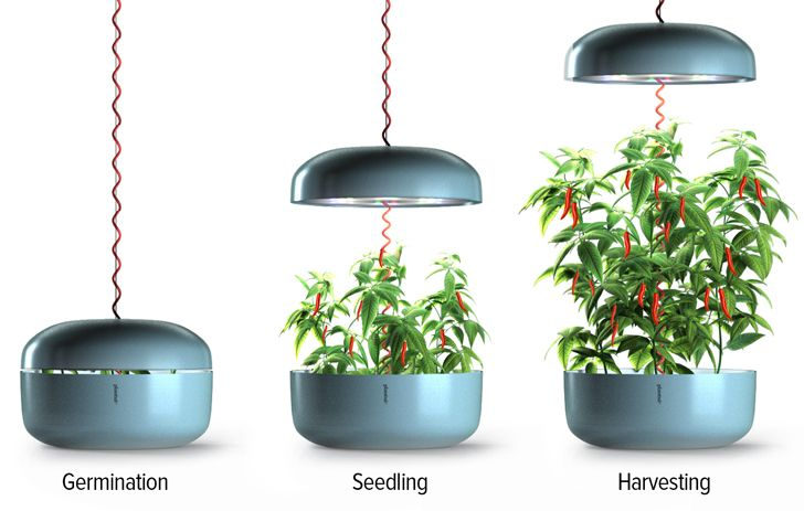 Plantui: The First Hydroponic Smart Garden